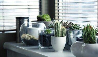 玄関の観葉植物おすすめ21選!風水効果抜群!