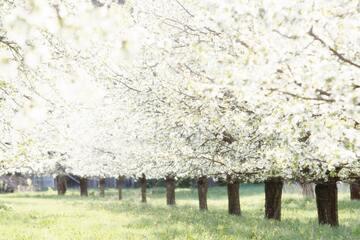 カップルで春に行きたい旅行先13選!【日本国内】