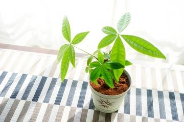 観葉植物を風水で選ぶ!玄関・トイレ・リビング・キッチンなど!
