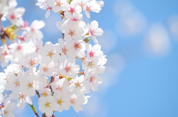 春にオススメの東京デートスポット♡定番から本当の穴場まで31選