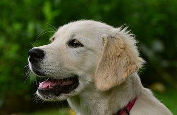 【2021年最新】犬の名前ランキングTOP10!オス・メス別や海外編も紹介