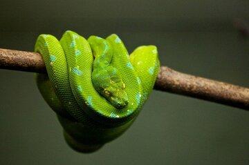 【夢占い】蛇に噛まれる夢の意味|蛇の色・特徴・パターン別15選!