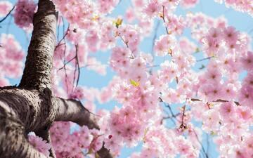 春生まれの女の子の名前120選!春らしい自然や漢字をイメージ♡