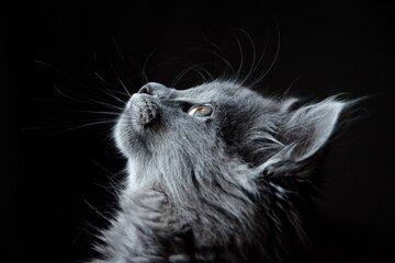 猫が死ぬ夢占い21選!飼い猫・野良猫・事故などパターン別に紹介