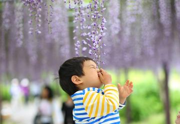 4月30日の誕生石・誕生花・星座・運勢・相性は?【365日誕生日占い】