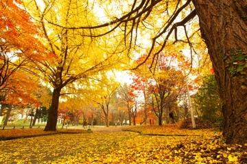 手入れしやすくおしゃれ!シンボルツリー・目隠しにおすすめの庭木24選
