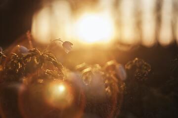 11月27日の誕生石・誕生花・星座・運勢・相性は?【365日誕生日占い】