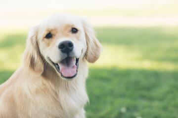 珍しい犬の名前51選!参考になるおすすめの名付け方も紹介!