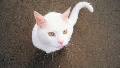 白猫の名前オス・メス別20選!人気の白猫キャラクターもご紹介!